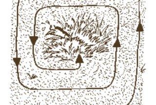 Kosci se pred kosilnico skrivajo v nepokošeni travi.