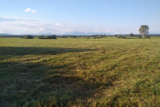 Pticam prijazen način košnje travnikov na območju naravnega rezervata Iški morost