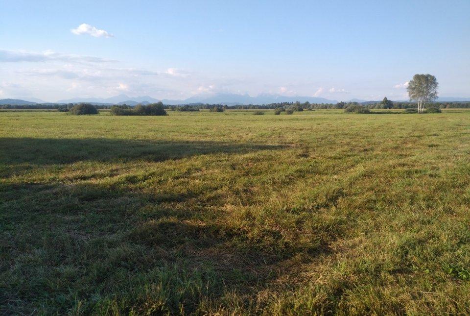 Pokošeni travniki na območju Naravnega rezervata Iški morost