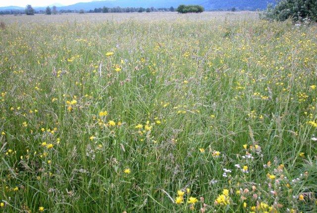 Nižinski ekstenzivno gojeni travniki