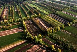 Razgibana krajina s povezanim sistemom mejic omogoča ohranjanje vrste.