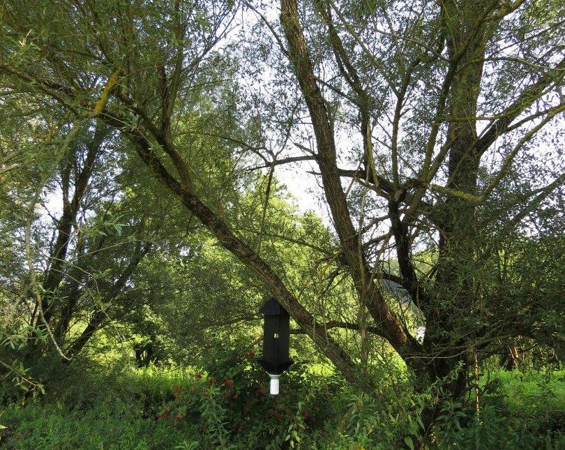 Ena od 147 prestreznih pasti za raziskovanje razširjenosti puščavnika