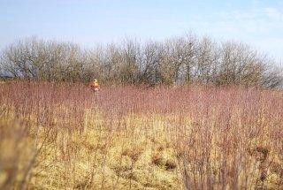 Zaradi intenzivne rasti krhlike je stanje nekaterih travnikov na meji ugodnega.
