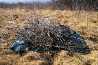 Ob odsotnosti košnje se lahko na travnikih v zelo kratkem času pojavi gosta zarast.