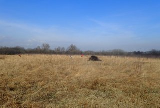Zaradi prisotnosti gosenic na travniku je potrebno ročno odstranjevanje zarasti.