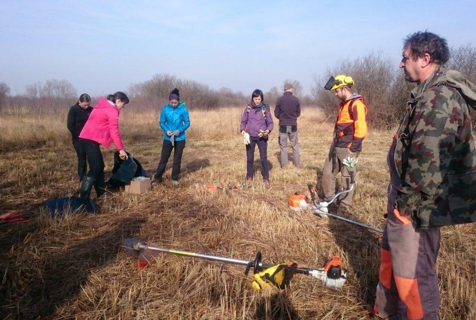 Delovna akcija projektne skupine PoLJUBA – odstranjevanje krhlike s površin z barjanskim okarčkom