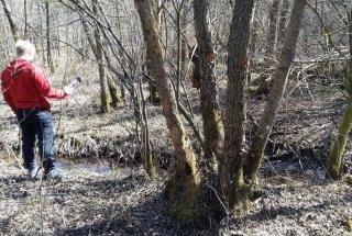 Odkazilo dreves v strajanovem bregu