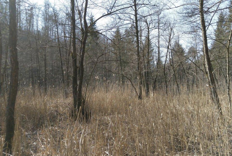Strajanov breg – črna jelša