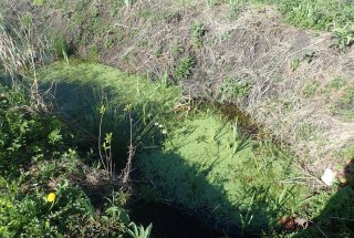 Določitev mest za izkop vodnih teles za močvirsko sklednico