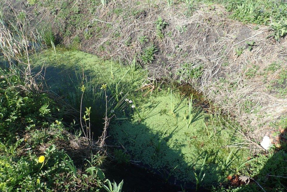 Z razširitvijo terciarnega jarka do primernega habitata za močvirsko sklednico.