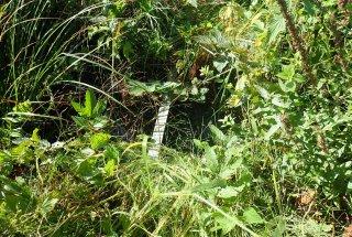 Z mikrozapornicami bomo dosegli večjo namočenost okoliških travnikov.