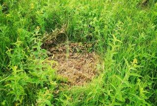 V boj s krhliko v naravnem rezervatu Iški morost