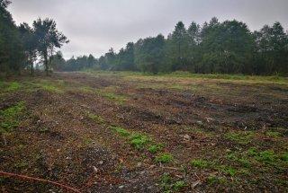 Na nekaterih zemljiščih so zunanji izvajalci že zaključili z odstranjevanjem zarasti. Na površinah bomo v prihodnjih sezonah vzpostavili ekstenzivne vlažne travnike s sistemom mejic.