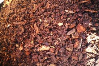 V gnezdilnice smo dodali lesni mulj, s katerim se hranijo ličinke.