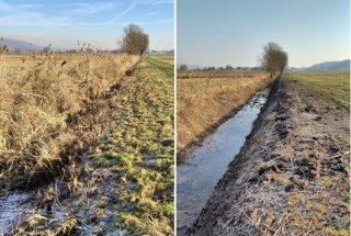Bluški jarek pred izvedbo (levo) in po izvedenih ukrepih za izboljšanje stanja habitata koščičnega škratca (desno)