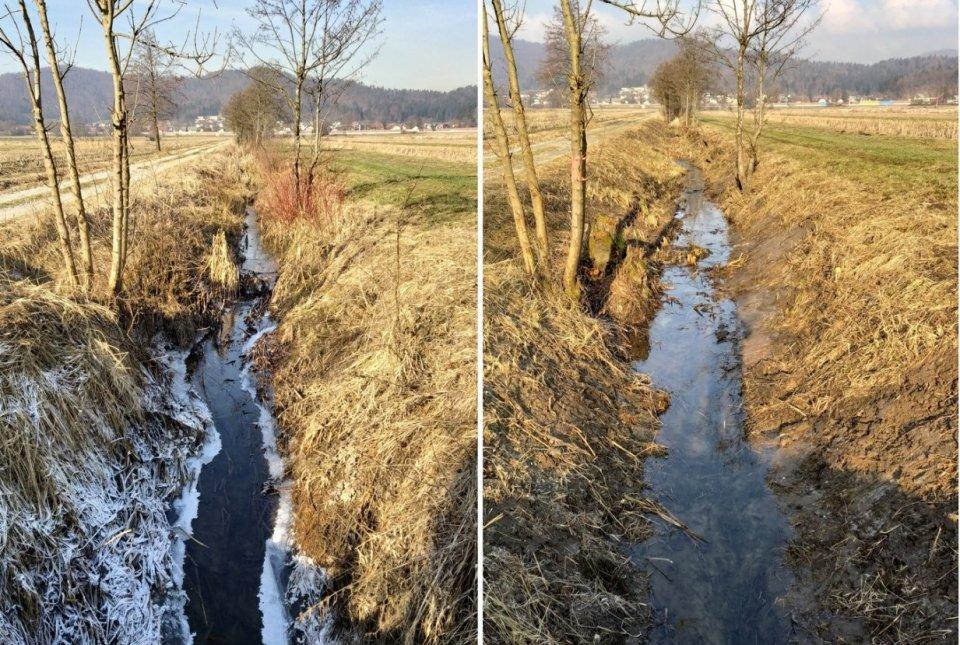 Ajdkov jarek pred izvedbo (levo) in po končani košnji obrežne in vodne vegetacije (desno)