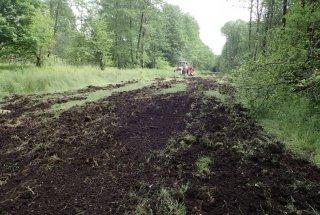 Setev trave bo pripomogla k omejevanju razširjanja invazivnih vrst