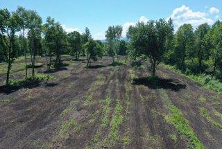 Še nedavno zaraščena zemljišča po zaključeni setvi doživljajo preobrazbo v mokrotne travnike.