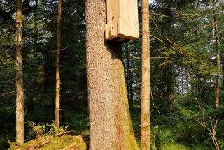 Gojilnica z lesnim muljem, v katero smo naselili ličinke.