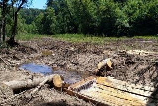 Leseni zadrževalni pragovi bodo povečali namočenost površine, kjer se vzpostavlja mokrotni travnik.