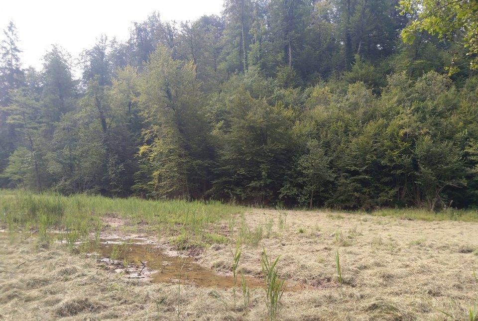 Pokošeno in posušeno travo z bližnjega travnika smo porazdelili po zemljini z namenom, da se vzpostavi avtohtona vegetacija.