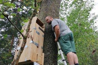 Gojilnice so nameščene na primerna habitatna drevesa.