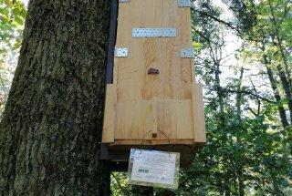 V lesene gojilnice so bile v prvih dneh septembra naseljene ličinke hrošča puščavnika.