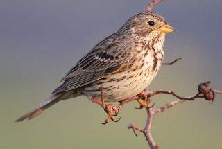 Objavljeni poročili o gospodarjenju s habitati in o pticah v Naravnem rezervatu Iški morost