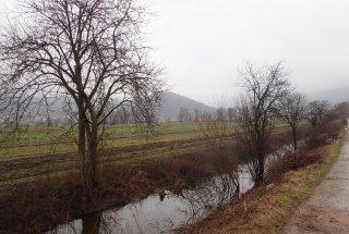 V okviru projekta PoLJUBA letošnjo zimo nadaljujemo z izvajanjem ukrepov za obnovo habitatov koščičnega škratca na Ljubljanskem barju