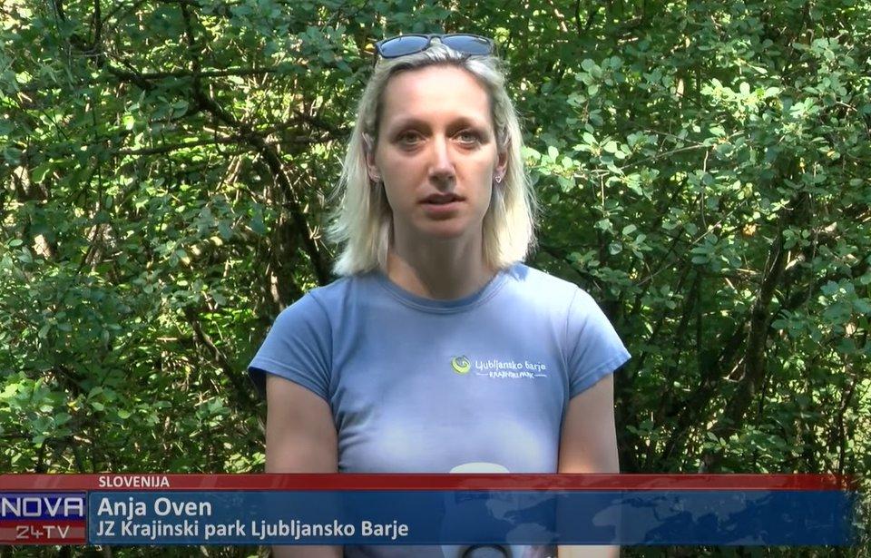 Prispevek o doselitvi hrošča puščavnika tudi na Valu 202 in Novicah ob 17h na Nova24TV in Dnevniku.si
